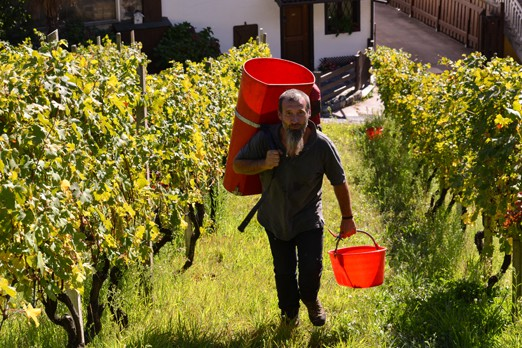 enologia eroica Valtellina, coperativa sociale il gabbiano