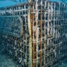 Vini speciali affinati in mare