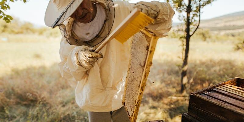 apicoltore che solleva arnia con api